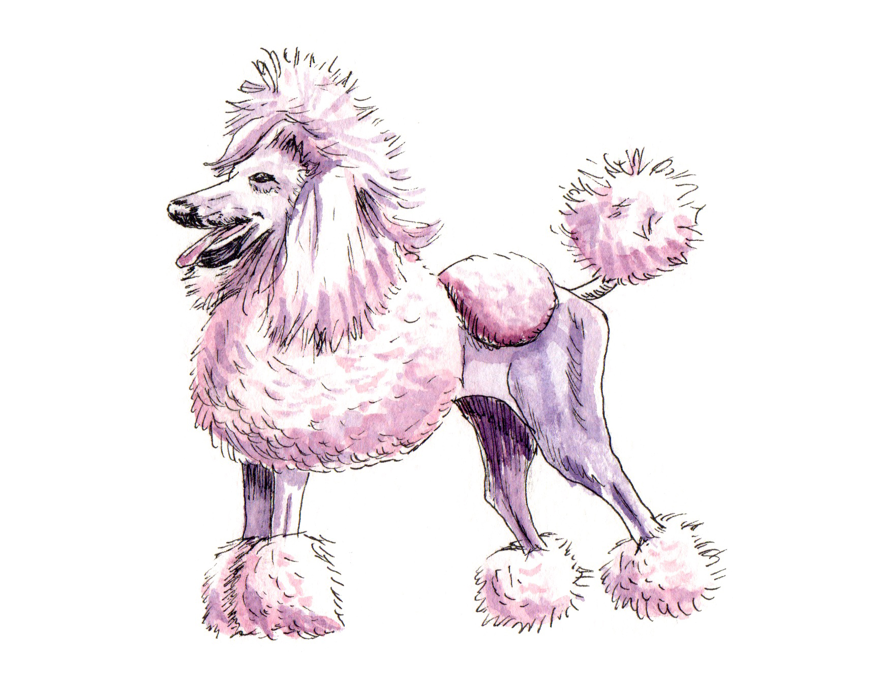 French Poodle Doodlewash