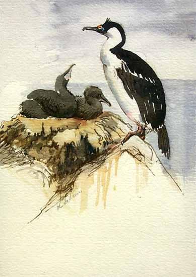 Antarctic Cormorants by Lucia deLeiris