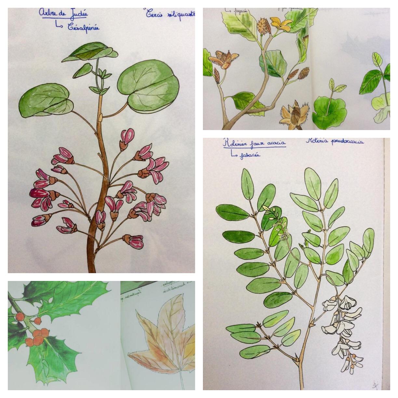 GUEST DOODLEWASH: A Sketchy Herbarium
