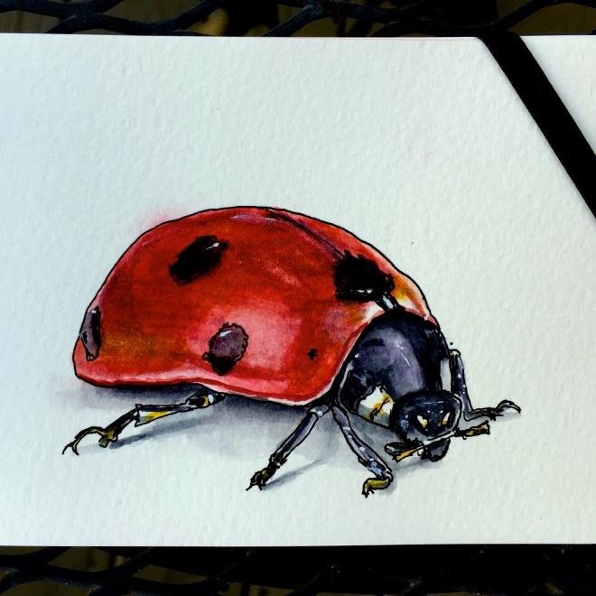 Ladybug by Charlie O'Shields