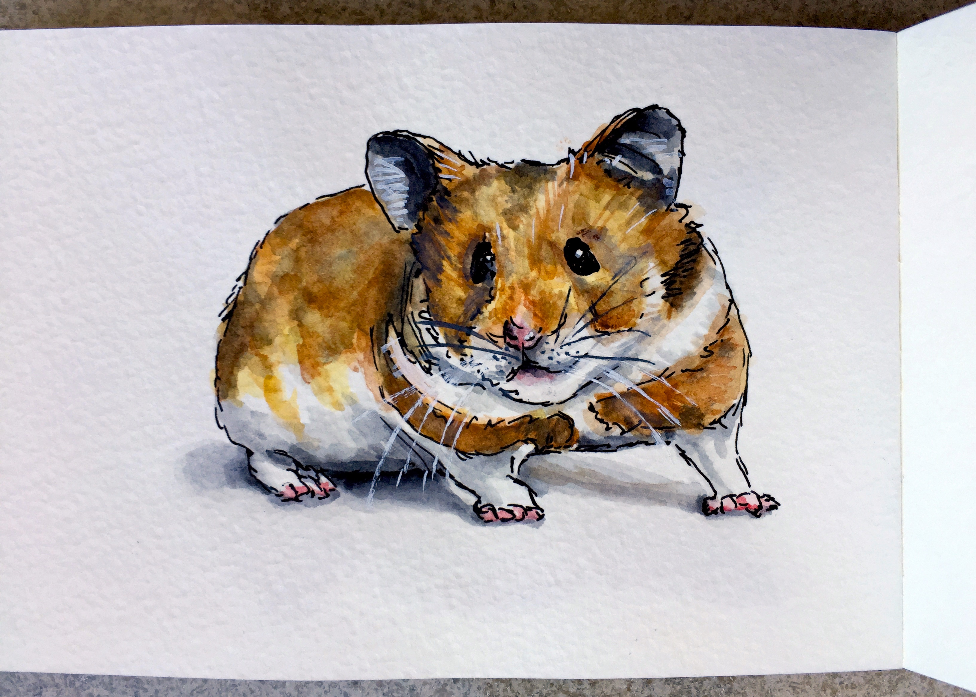 Sparky the Hamster