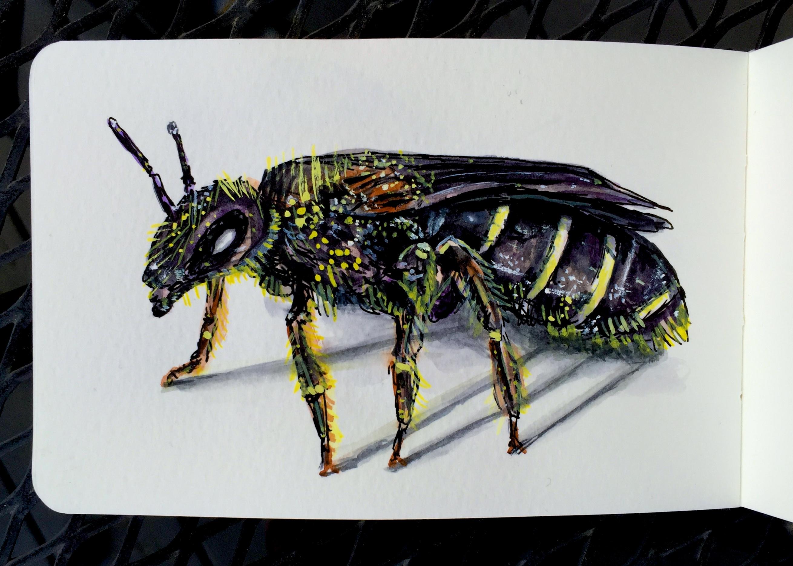The Sweat Bee