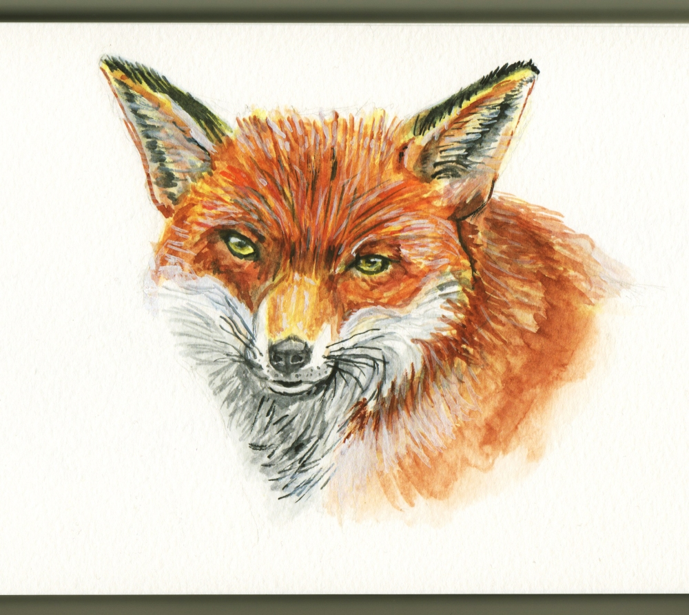 Red Fox by Charlie O'Shields