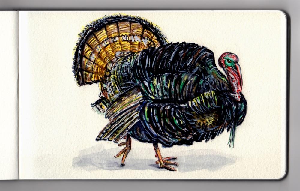 Turkey Day by Charlie O'Shields