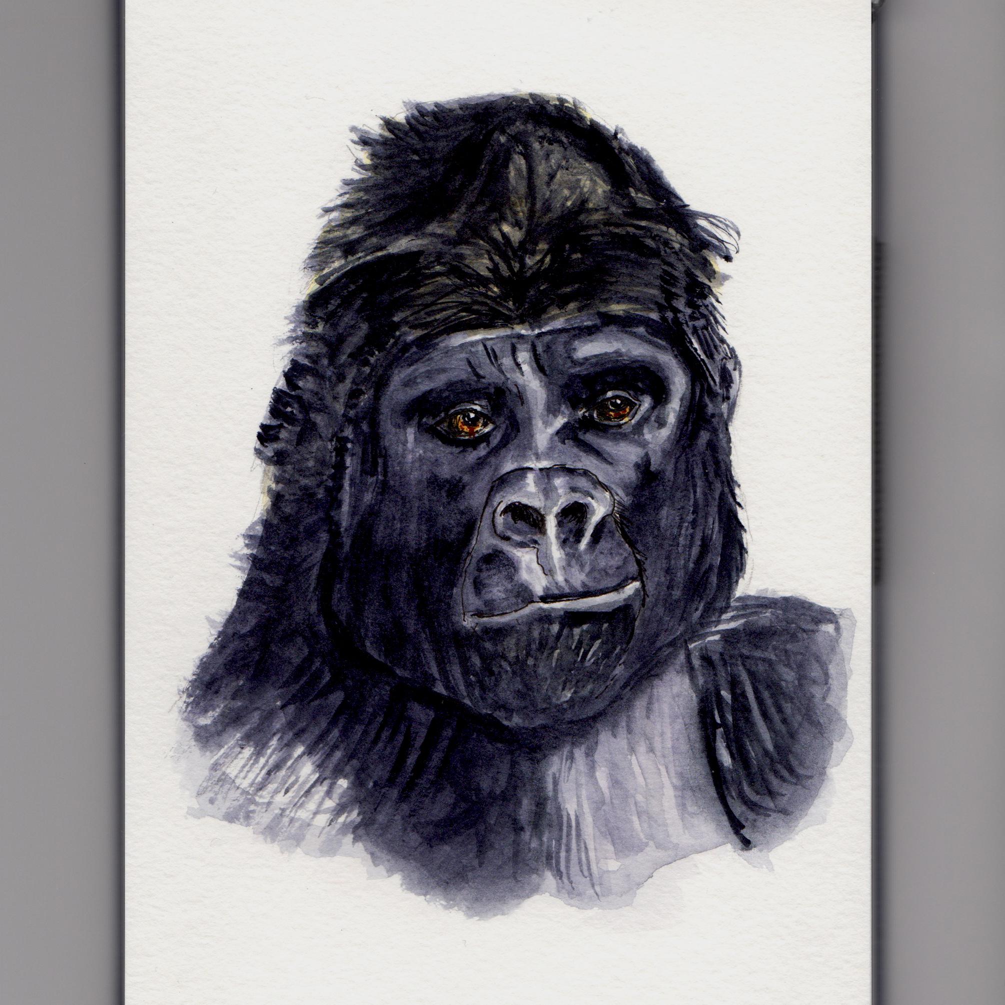 A Big Gorilla