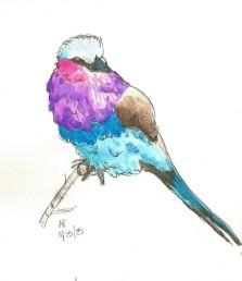 Doodlewash by Annie Parsons