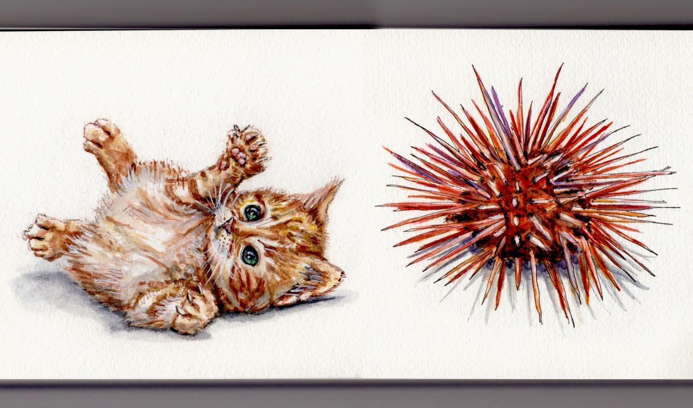 Cat and Urchin Doodlewash