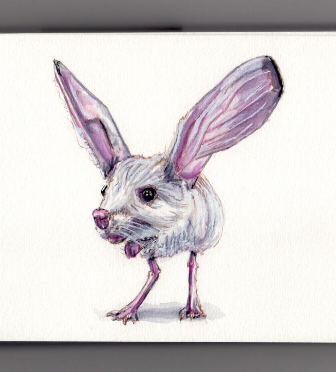 Long-Eared Jerboa Doodlewash