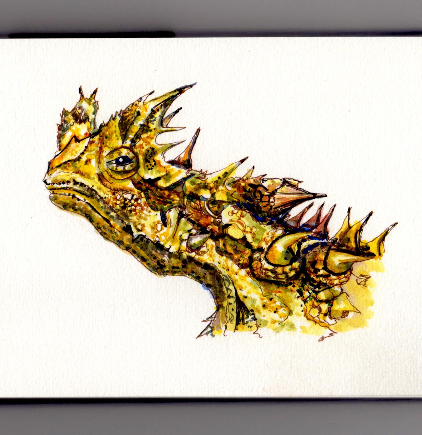 Thorny Devil Doodlewash - Thorny dragon, mountain devil, thorny lizard watercolor painting and sketch in australia