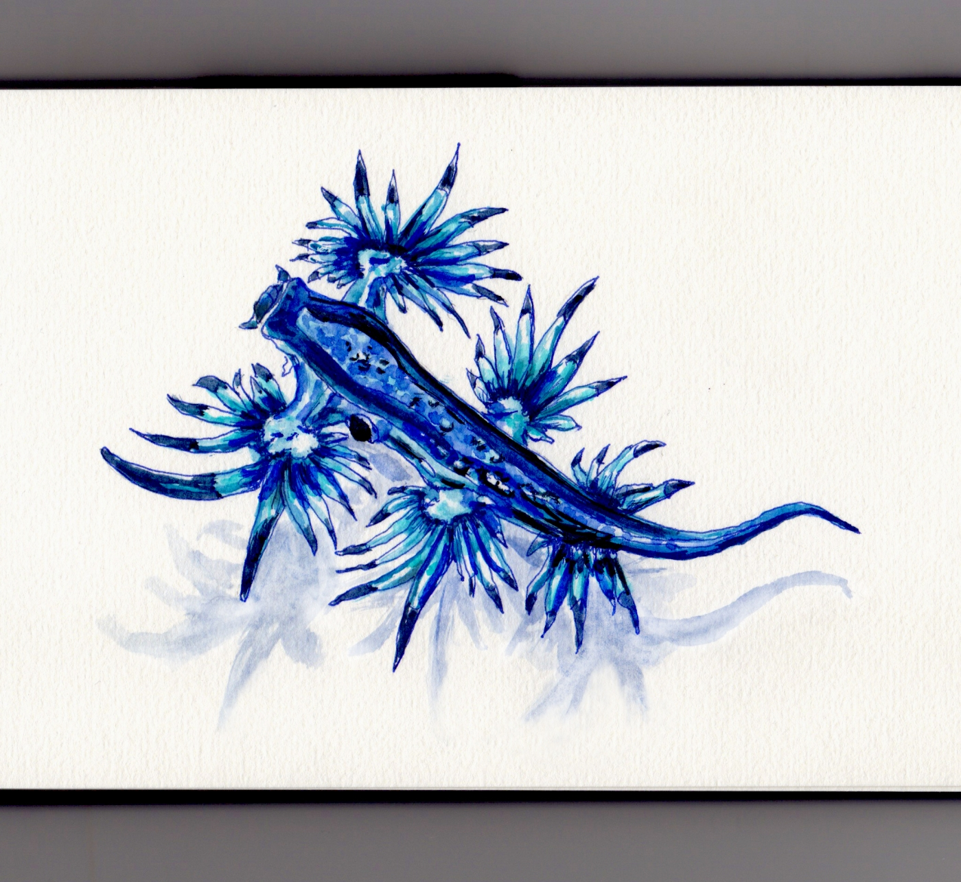 Glaucus Atlanticus Doodlewash Blue sea swallow, blue angel, blue glaucus, blue dragon, blue sea slug and blue ocean slug watercolor illustration