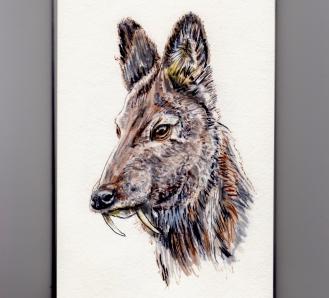 Vampire Deer - Siberian Musk Deer Doodlewash in watercolor asian deer Kashmir