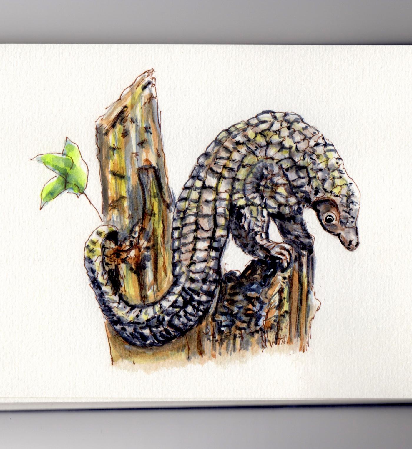 Doodlewash of Pangolin - Endangered Species in watercolor sketch painting Red List