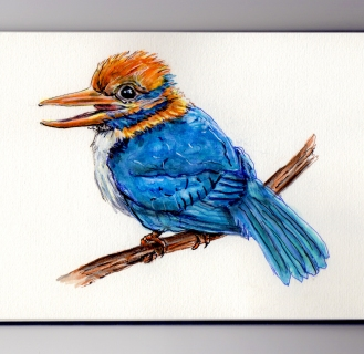 Moustached Kingfisher Doodlewash by Charlie O'Shields