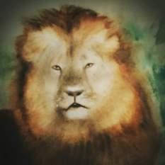 Doodlewash by Pat Saez - watercolor painting and sketch of lion portrait of lion's face