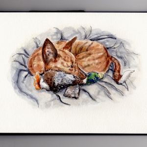 National Pet Day - Doodlewash watercolor illustration of basenji dog and duck toy