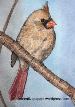 Doodlewash by Carol Hartmann - watercolor painting of female cardinal sitting on tree branch