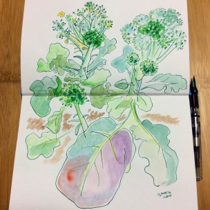 Doodlewash by Naoko Ebihara - watercolor sketch and painting of broccoli