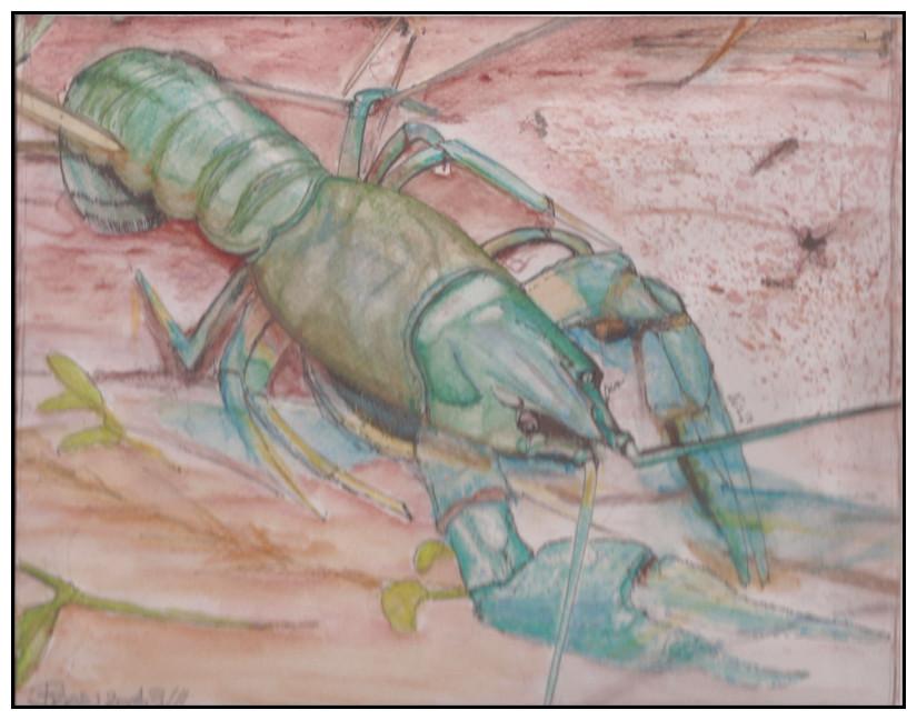 Doodlewash by Schokohund - Mijello watercolor of Lobster
