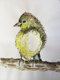 Doodlewash and watercolor sketch by Carolina Russo of Orange Crowned Warbler on a branch