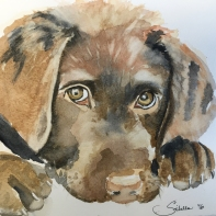 Doodlewash and watercolor painting by Sibella of Chocolate Lab Puppy