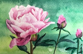 Doodlewash and watercolor painting by Sibella of pink peony peonies
