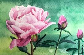 Doodlewash and watercolor painting by Sibella of pink peony peonies