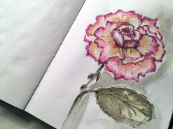 Doodlewash and watercolor sketch by Carolina Russo of pink red rose