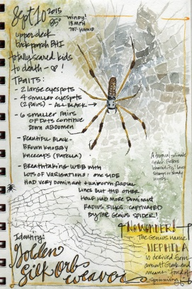 Doodlewash and watercolor sketch by Tonya at Scratchmade Journal of golden silk orb weaver spider
