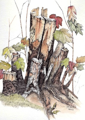 Tree stump by Jay Vance - Doodlewash and watercolor sketch of bark and leaves