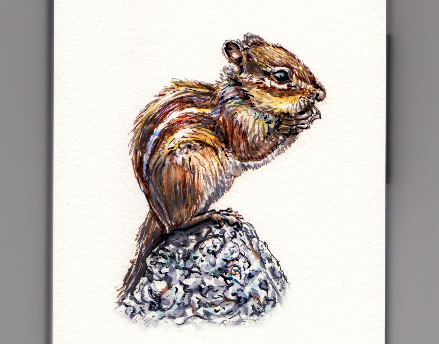 A Tiny Little Chipmunk doodlewash and watercolor sketch of furry little rodent on a rock