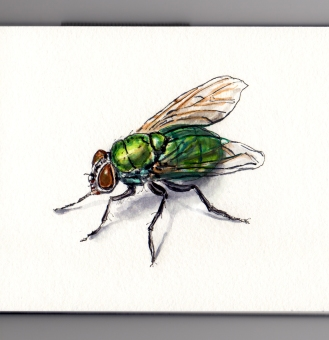 Doodlewash and watercolor sketch of green blow fly house fly on white background
