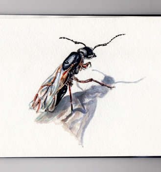 Flying Ant Doodlewash and Watercolor sketch carpenter ant casting shadow