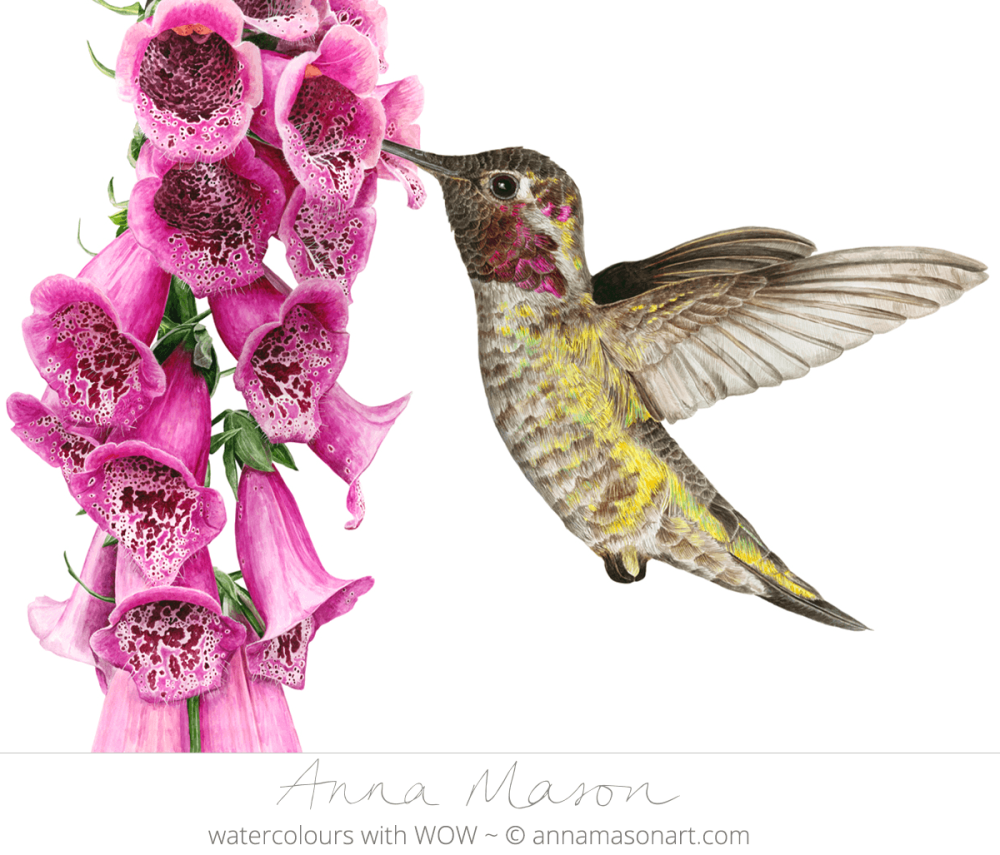 Doodlewash - Watercolor painting by Anna Mason of Hummingbird and flowers
