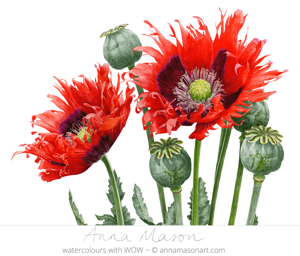 Doodlewash - Watercolor painting by Anna Mason of red flowers