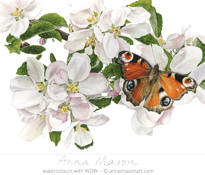 Doodlewash - Watercolor painting by Anna Mason of monarch butterfly and white flowers