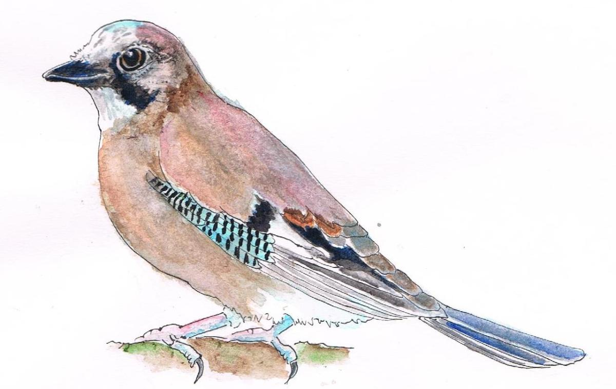 Doodlewash and watercolor sketch of bird by Marches Country Lady