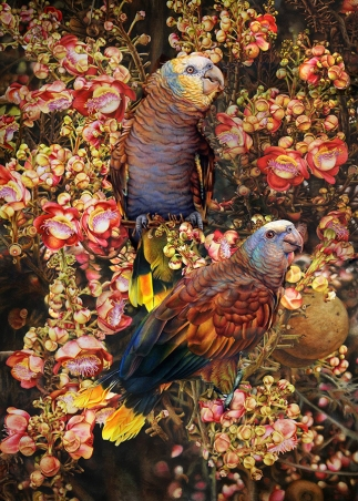 Doodlewash - watercolor painting illustration by Heidi Willis of Parrots in Cannonball Tree