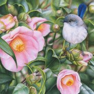 Doodlewash - watercolor painting illustration by Heidi Willis of blue wren in camellias