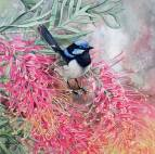 Doodlewash - watercolor painting illustration by Heidi Willis of Blue wren and grevillea