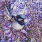 Doodlewash - watercolor painting illustration by Heidi Willis of blue wren in wisteria