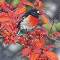 Doodlewash - watercolor painting illustration by Heidi Willis of male robin