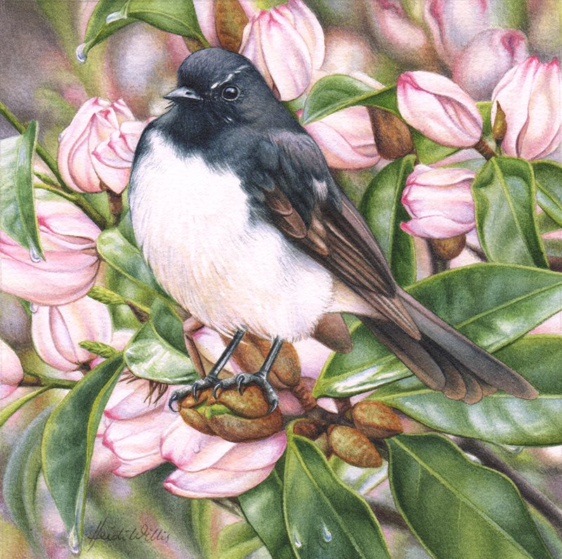 Doodlewash - watercolor painting illustration by Heidi Willis of Willis Wagtail