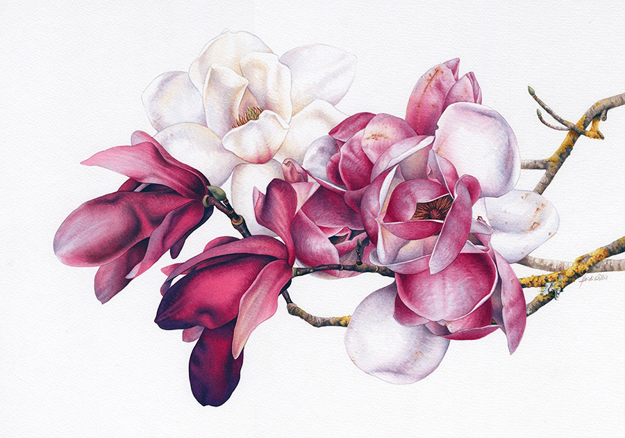 Doodlewash - watercolor painting illustration by Heidi Willis of Magnolias