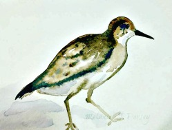 Doodlewash and watercolor sketch by Melanie J. Dorsey of sandpiper