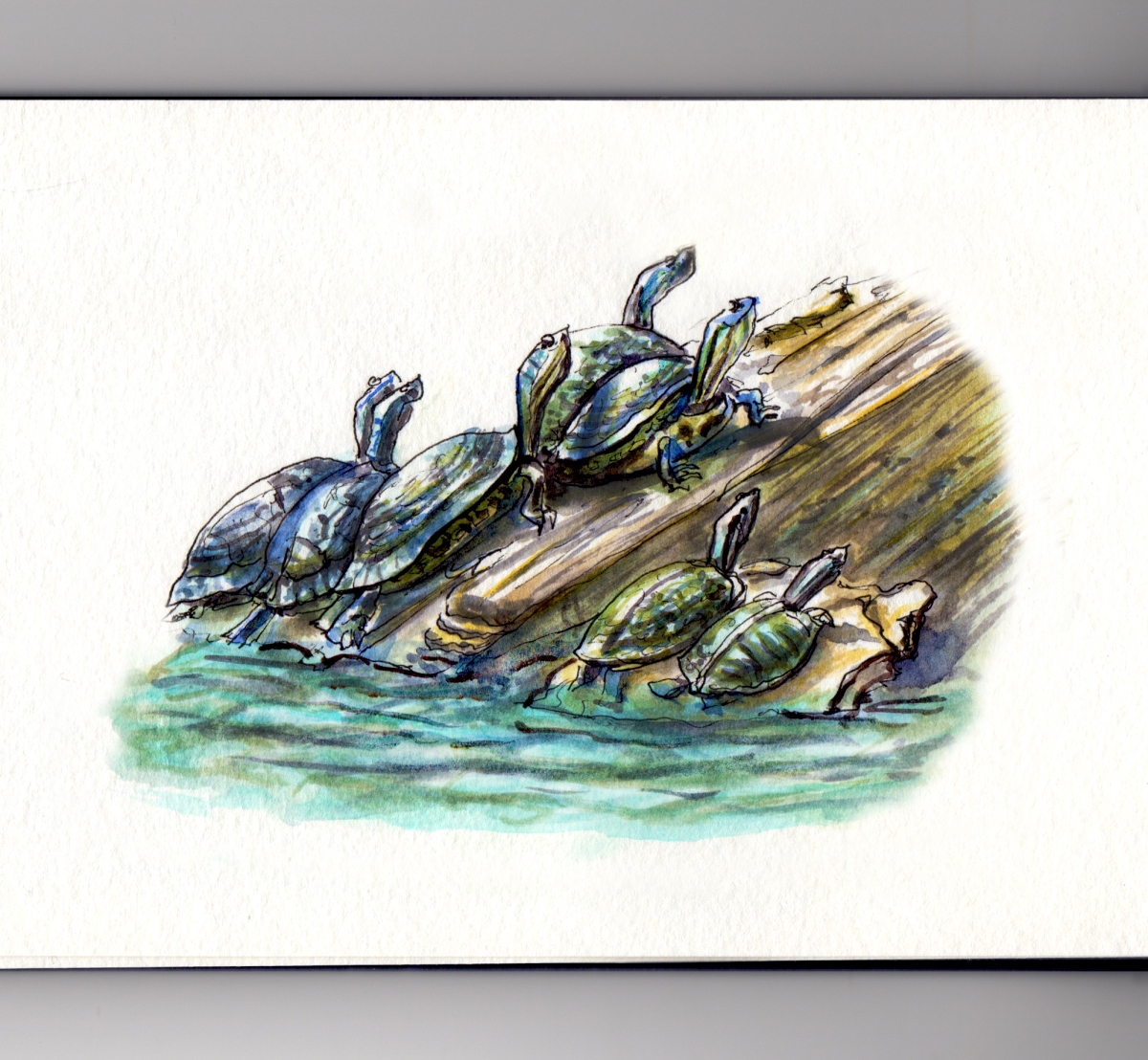 My Favorite Park Loose Park Turtles Sunbathing #WorldWatercolorGroup
