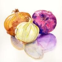 Doodlewash and watercolor sketch by Meliessa Garrison Elliott of Onions