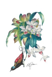 Doodlewash - Watercolor by Bill Jackson of Wilson's Bird of Paradise and Orchid