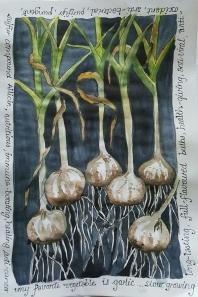 #Doodlewash - Watercolor by Nadene Esterhuizen of garlic #WorldWatercolorGroup