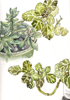 #Doodlewash - Watercolor by Jenna Lechner plants in pots #WorldWatercolorGroup