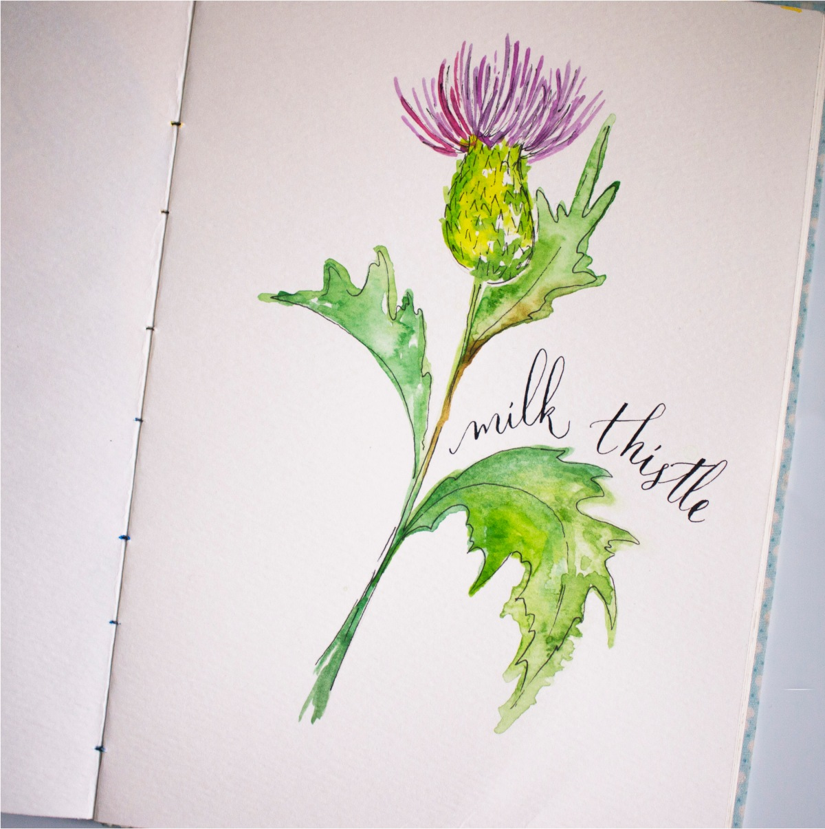 #Doodlewash - Watercolor by Sharmini Markandu - milk thistle - #WorldWatercolorGroup